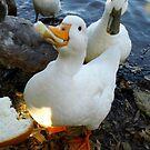 Greedy Duck by WildestArt