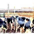 Cows by Giuseppe Cocco