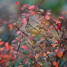 Autumn in my Dreams by autumnwind
