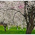 Primavera a Polonia . Spring at Cracow . Poland. Polen.Pologne. I am especially grateful to EVERYBODY for ALL the wonderful, encouraging comments ! Views (2035) . Thank you ! by © Andrzej Goszcz,M.D. Ph.D