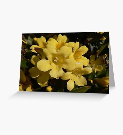 Yellow Carolina Jasmine Blossom Close Up Greeting Card