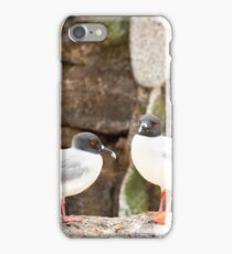 Swallow-tailed gulls iPhone Case/Skin