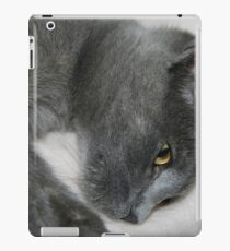 Close Up Portrait Of A Relaxed Grey Cat iPad Case/Skin