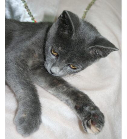 Cute Grey Kitten Relaxing Sticker