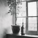 Bottle Plant by Andy Freer