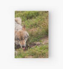 Wolf drinking Hardcover Journal