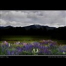 Dusk on the Franconia Range Poster & Greeting Card by Wayne King