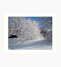 Glistening Trees ^ Art Print