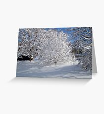 Glistening Trees ^ Greeting Card