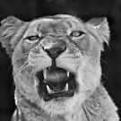 Snarl II by iltby