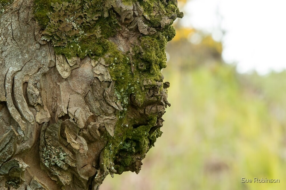 Tree Face by Sue Robinson