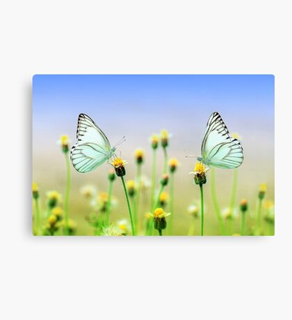 Butterflies Spring Nature Scenery Canvas Print