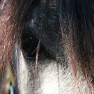 Andalusian - Look into my soul by Susie Walker
