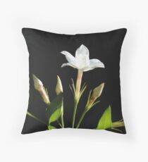Close Up Of Jasminum Officinale Isolated On Black Throw Pillow