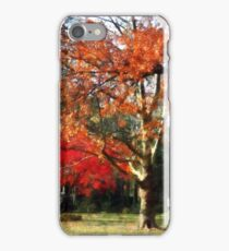 Autumn Sycamore Tree iPhone Case/Skin