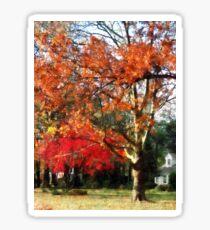 Autumn Sycamore Tree Sticker