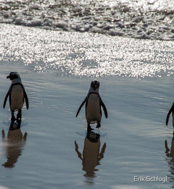 African Penguins, South Africa by Erik Schlogl