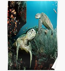 Turtle in the Ocean Poster