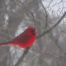 Cardinal Calm in Chaotic Conditions by M-EK