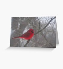 Cardinal Calm in Chaotic Conditions Greeting Card