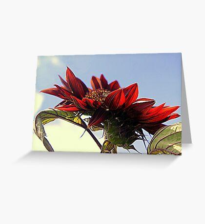 Sun Worshipper Greeting Card