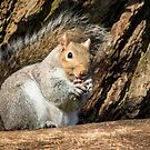 Squirrel on Branch by Ellesscee