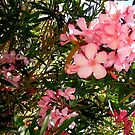 Pink and red oleanders by Shulie1