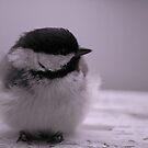 Chickadee by Diane Blastorah