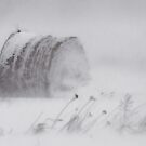 Hay Bale in Blizzard by Debbie  Roberts