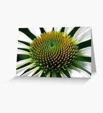Echinacea in the Garden Greeting Card