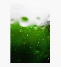 Spider Webs In The Rain Wet Photographic Print