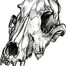 Canine Skull by Pip Abraham
