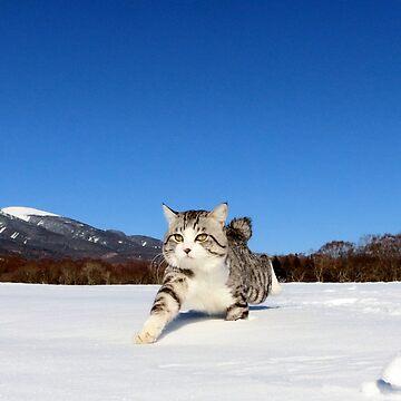 cross country cat by NYANKICHILABO