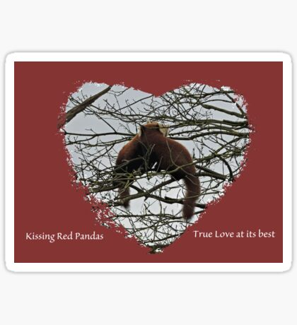 Kissing Red Pandas Sticker