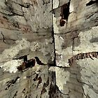 Hole In The Wall by Carla Jensen