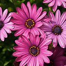 Purple Flowers by CaseyO
