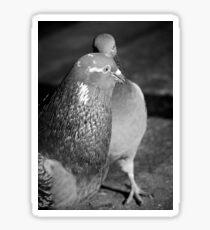 Pigeon talk Sticker