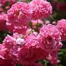 Wild Roses With Garden Background by taiche