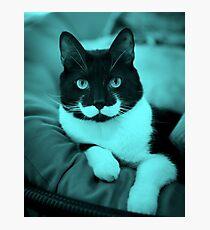 Cat Mustache Photographic Print
