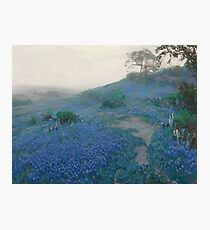 Julian Onderdonk - Blue Bonnet Field, Early Morning, San Antonio Texas  Photographic Print