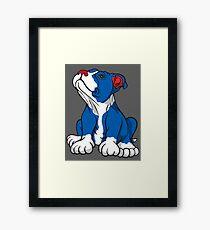 American Pit Bull Puppy  Framed Print