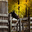 One Horse Waiting by Betty MacRae