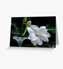 White Impatiens Greeting Card