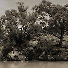Across the Wingecarribee River, NSW by dcarphoto