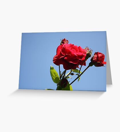 Red Roses with Blue Sky Background Greeting Card