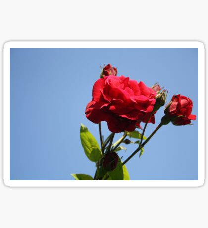 Red Roses with Blue Sky Background Sticker