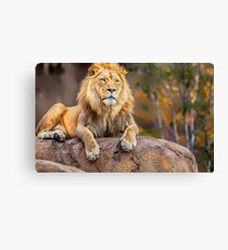 Once upon a time Lion Canvas Print, Photographic Print, Art Print, Framed Print, Metal Print, Greeting Card, iPhone Case, Samsung Galaxy Case, iPad Case, Throw Pillow, Tote Bag, Canvas Print