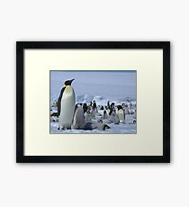 Emperor Penguin and Chicks - Snow Hill Island  Framed Print