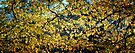 Branches and Leaves by Nigel Bangert