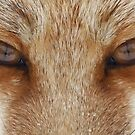 Fox Eyes  by Jim Cumming